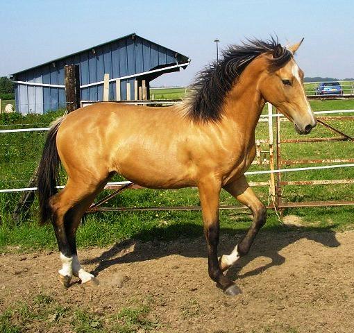 ZIBALOO: Cheval, jument, poulain / poney, ponette